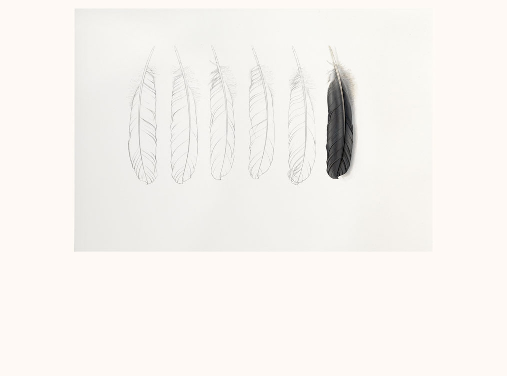 Grey feather and Pencil Feathers